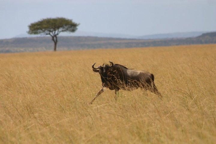 Masai mara... di skeepy