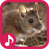 Mouse and Rat sounds