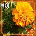Autumn Flowers HD icon