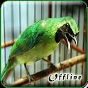 Cucak Ijo Gacor MP3 Offline icon