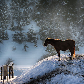 In the snow and the sun by Ana France - Animals Horses