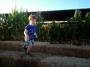 Photo: Finn at Tanaka Farms