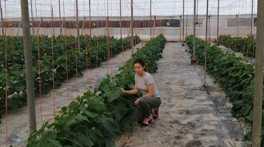 Agroponiente celebra el buen resultado del centro de Castell de Ferro