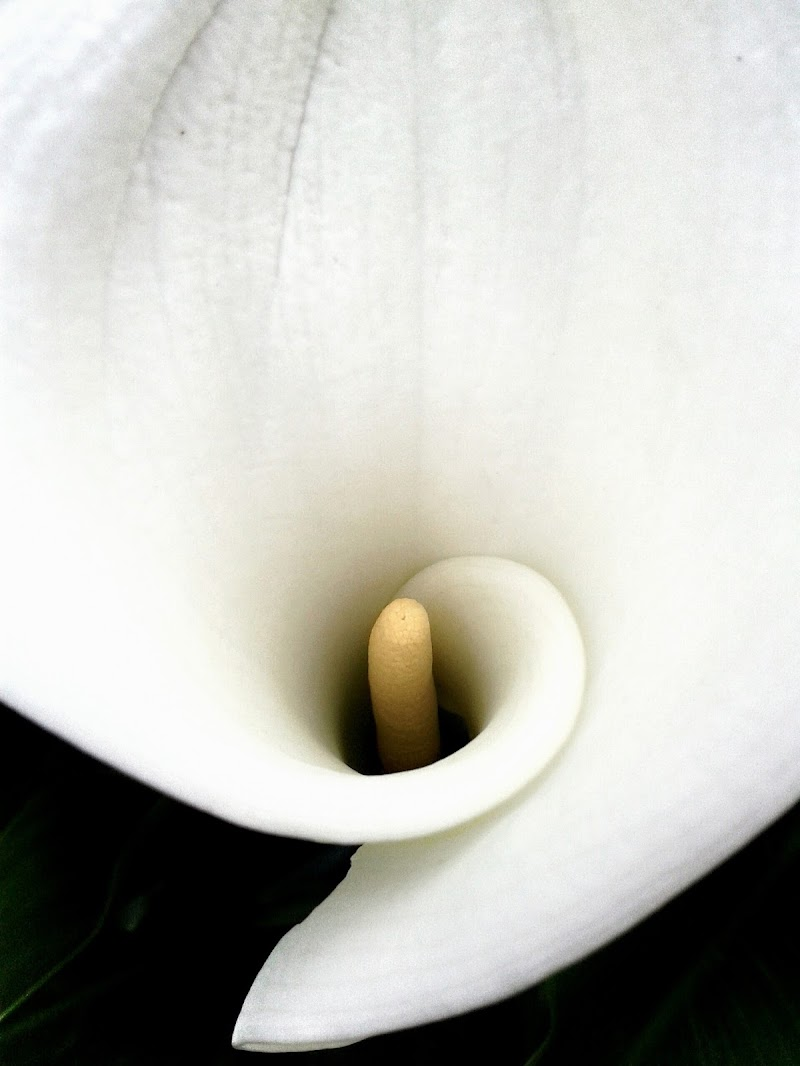 Calla di simhoney