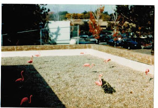 Photo: Flamingoes on the roof of the UPS room at the academic Computing Center Building, North Campus of the University of Michigan, Ann Arbor, 1985. This was the work of Bob Husak and George Helffrich.