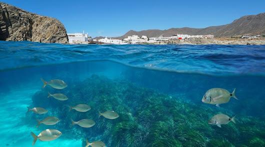 Ampliando el horizonte del éxito para Almería