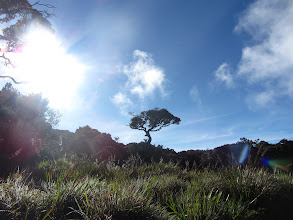 Photo: Horton's Plains.
