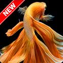 Betta Fish Wallpaper icon