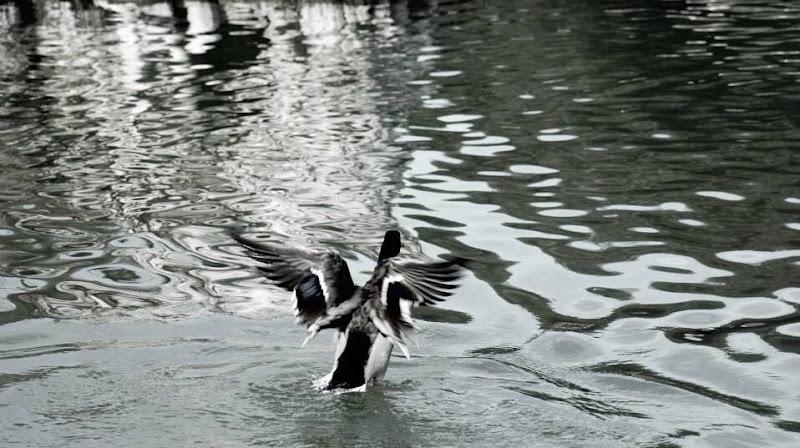 I can fly di Nenalarossa