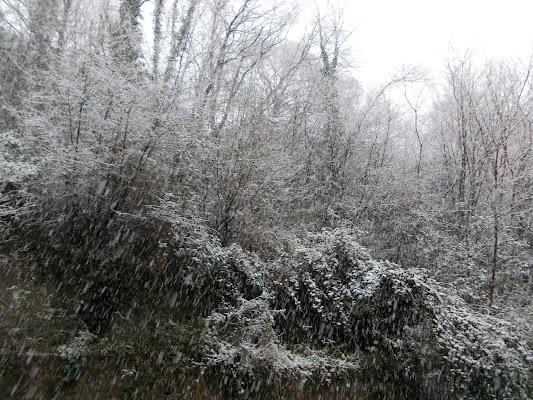 il freddo bosco di patrizietta