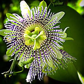 by Made Weli Rtanaya (EBENK) - Nature Up Close Other plants