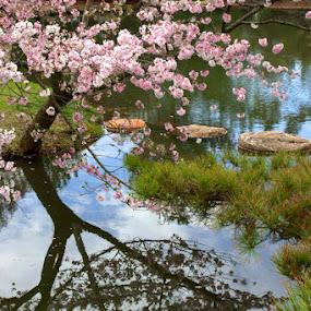 Spring Delight by Dougetta Nuneviller - City,  Street & Park  City Parks