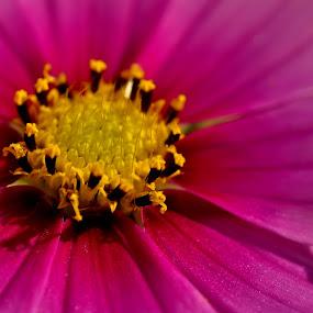 Color Full Life! by Abhishek Majumdar - Nature Up Close Flowers - 2011-2013 ( sarbajit, madhur, komal, vikram, nitesh )