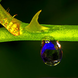 Drop and thorn by David Winchester - Nature Up Close Natural Waterdrops