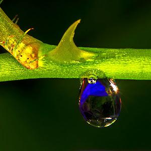 drop & thorn.jpg