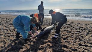 Técnicos de Equinac con el delfín varado.