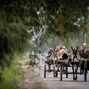 Traditional way of transport by Joyce Chang - Transportation Other ( transport, donkey, cart, traditional, road,  )