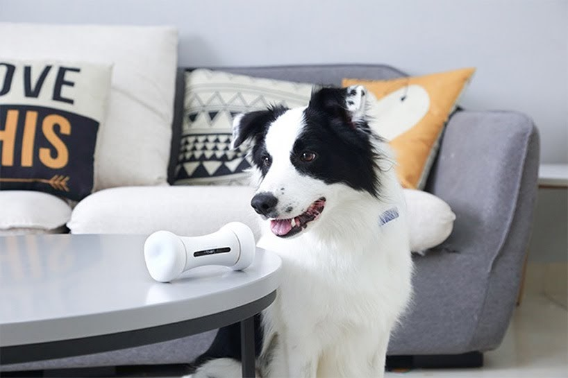 WICKEDBONE: el primer juguete para perros inteligente e interactivo del mundo
