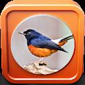 Kicau Burung Murai Batu Juara icon