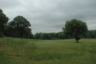 Photo: the compound. a possible tree candidate.