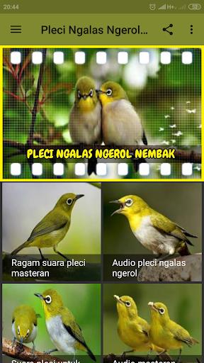 Pleci Ngalas Ngerol Nembak Offline Download Apk Free For Android Apktume Com
