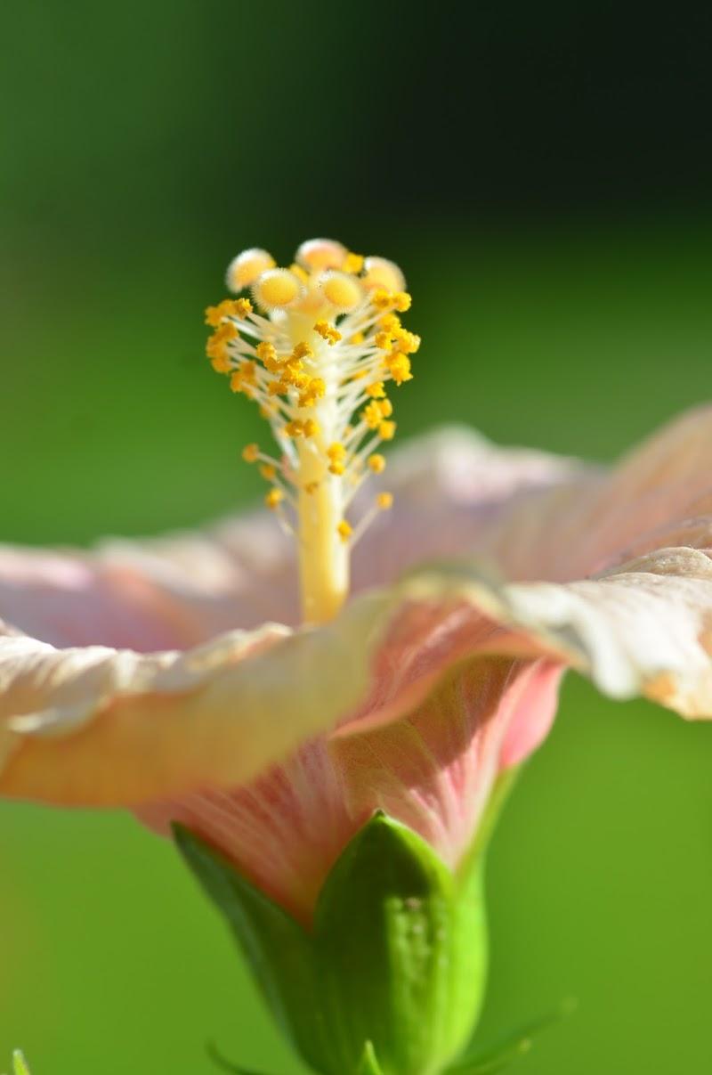 L'ultimo fiore di novembre di viola94