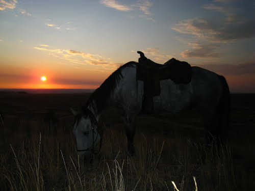 A Week as a Cowgirl Horseback Riding in Montana Ranch // A horse and a sunrise - perfect morning