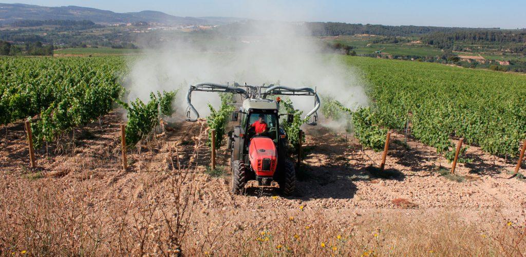 Vine treatments with sulfur