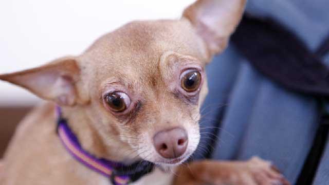 D:\БИЗНЕС\ДИМА\Картинки для подготовки дома для собаки\scared dog.jpg