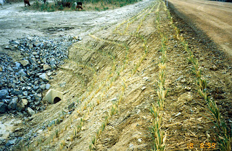 Photo: AUS-HYDR03 - Australia this culvert and drain protected by vetiver