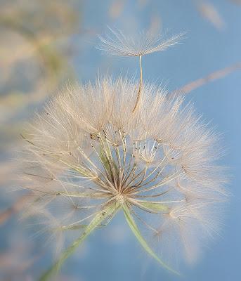 Aspettando il vento. di Naldina Fornasari