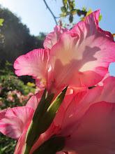 Photo: Yellow and pink flowers under soft sunlight at Wegerzyn Gardens in Dayton, Ohio.