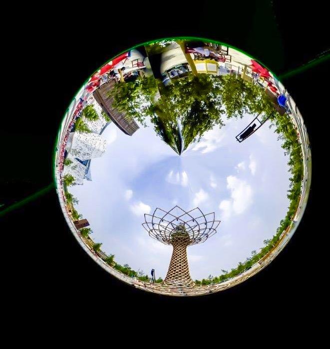 Expo Albero della vita  di UrziE