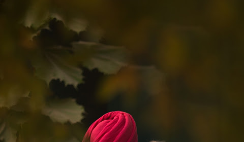 Wedding photographer Ludhiana (bikramjsingh). Photo of 06.01.2017