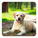 Labrador Live Wallpaper icon
