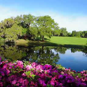 Savannah Ga Garden by Nancy Tubb - Flowers Flower Gardens ( oldest garden in us, flowers, plantation, garden, azaleas,  )