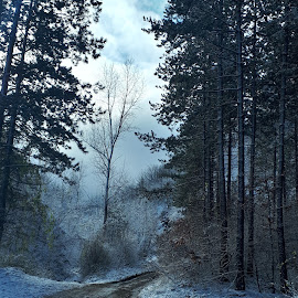 by Mladen Virijević - Landscapes Forests ( beautiful, forest, nature, winter, landscape )