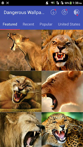 Wild Animal Wallpapers