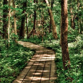 by Teresa Hoyt - Nature Up Close Trees & Bushes (  )