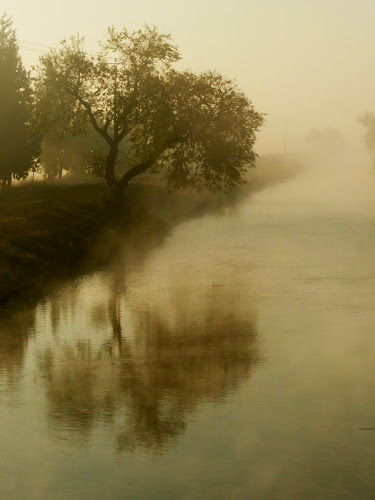 by Amir Elad - Nature Up Close Trees & Bushes