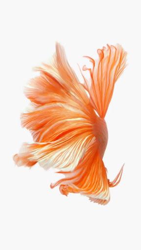 6S OrangeFish LiveWallpaper