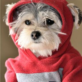 No.1 Fan by Costas Tsirgiotis - Animals - Dogs Portraits