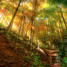 Big Trees of Light by George Bloise - Landscapes Mountains & Hills ( fall, orage, path, trees, leaves, evening, light, smoky mountains )