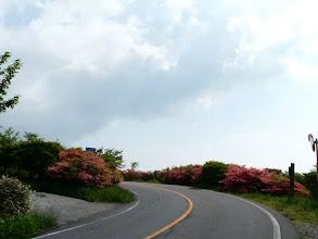 Photo: 八幡崎の車道にも