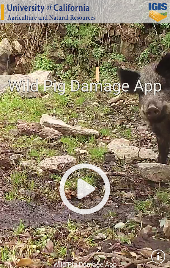 Wild Pig Damage- screenshot