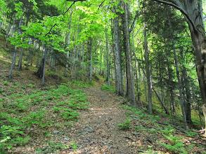 Photo: 10.Trochę bardziej stromy fragment szlaku.