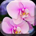Pretty Orchids Live Wallpaper icon