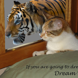 by Kimberly Gibson - Typography Captioned Photos ( cat photography, reflection )