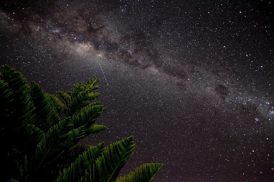 Norfolk Island Pine and Satellite at Gerroa by Ian Mills - Landscapes Starscapes ( pwcstars, stars, gerroa )