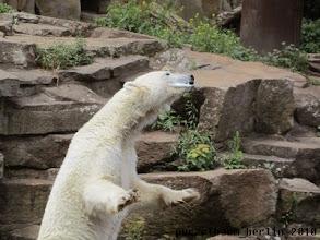Photo: Fisch - knapp daneben ist auch vorbei ;-)